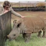 Rhino_Calf_TASA_Tours_and_Travel
