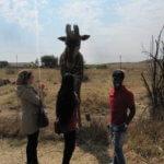 Giraffe_TASA_Tours_and_Travel